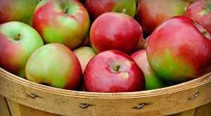 слабительные продукты питания при запорах