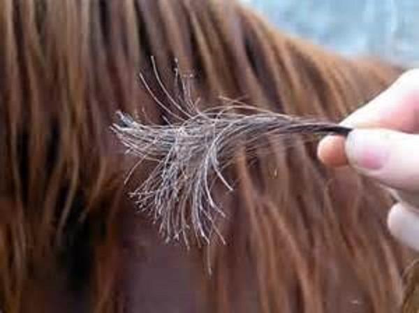 почему отламываются волосы